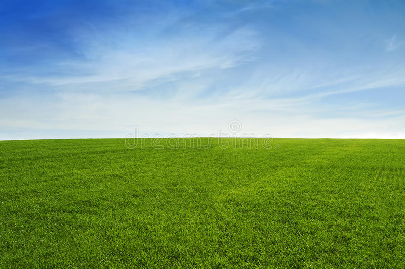 Grass field with blue sky. At the sunrise royalty free stock photo