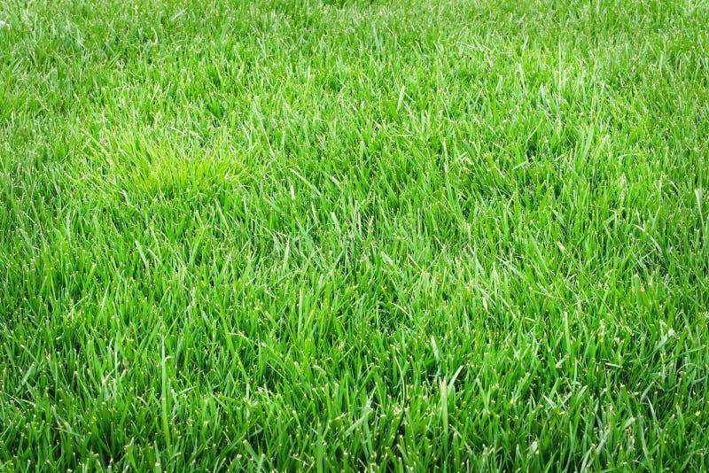 Grass field close up. Green grass texture stock images