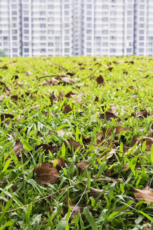 Grass Field Foreground Royalty Free Stock Photos