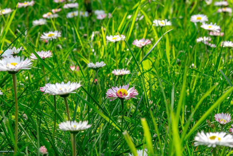 Grass field full of herbs and wild flowers stock photo
