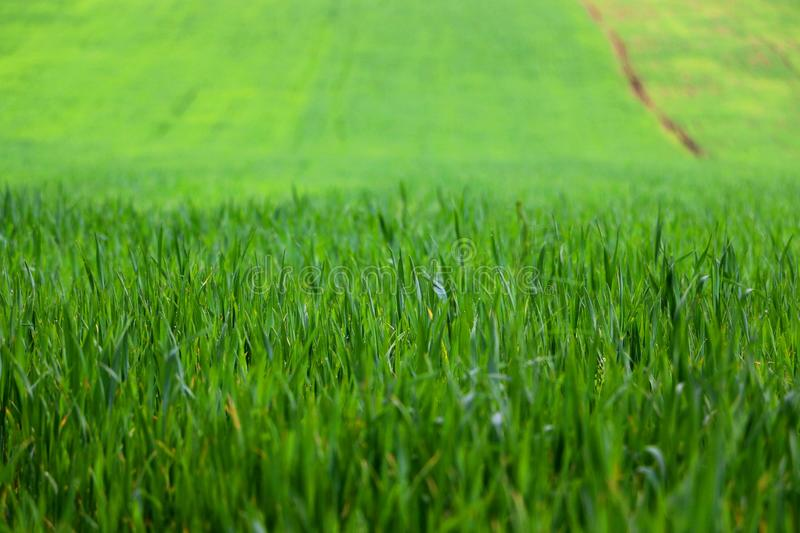Grass on the field royalty free stock photo