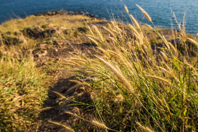 Grass Field on the mountain in front of the sea with soft sunlight royalty free stock photo