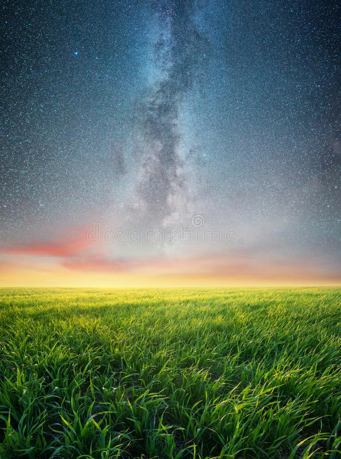 Grass on the field and night sky royalty free stock photo