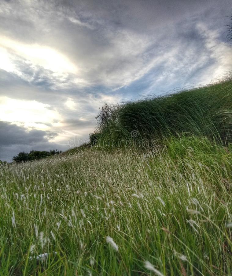 Grass field and skies royalty free stock photo