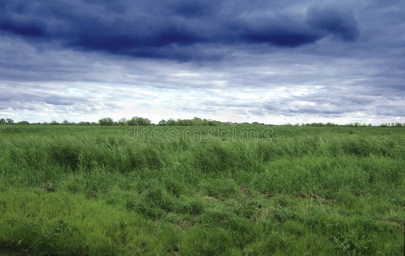 Download Grass field and sky stock photo. Image of clouds, landscape - 100406
