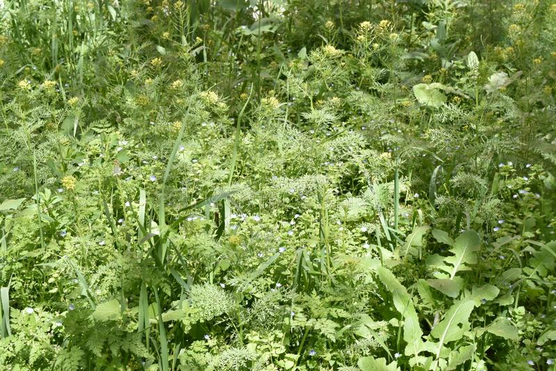 Meadow grass royalty free stock photos