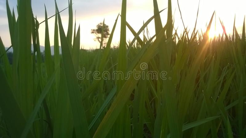 Sunset. Grass field and sunset royalty free stock photography
