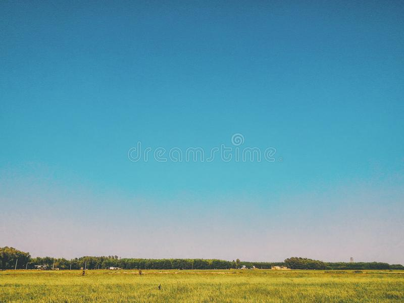 Grass Field Under Blue Sky at Daytime stock image