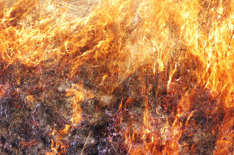 Download Grass Fire stock image. Image of danger, fire, grass - 24162463