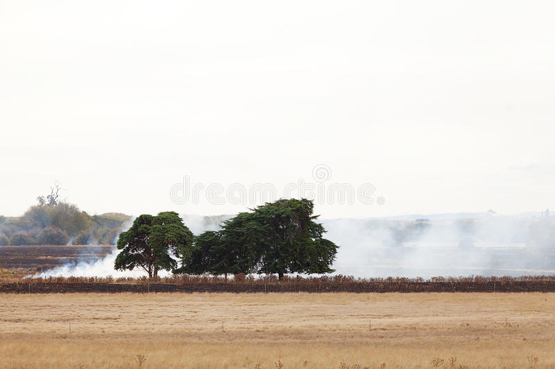 Download Grass Fire stock image. Image of off, grass, agriculture - 26123339
