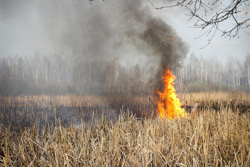Grass fire stock images