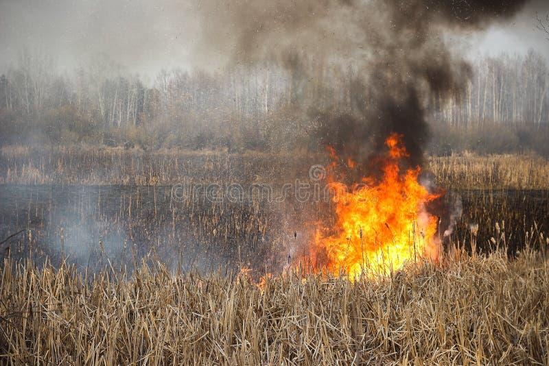Grass fire stock photos
