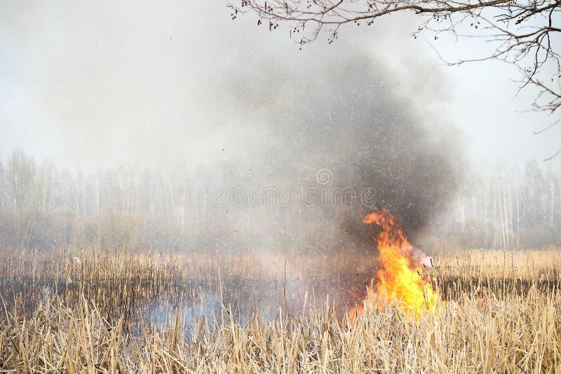 Grass fire royalty free stock photos