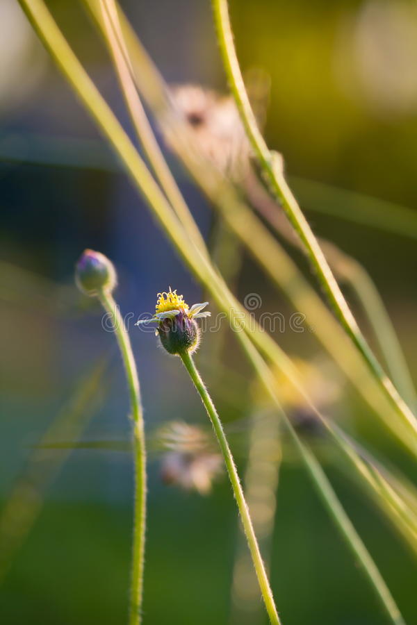 Download Grass flower stock image. Image of outdoor, tropical - 22530473