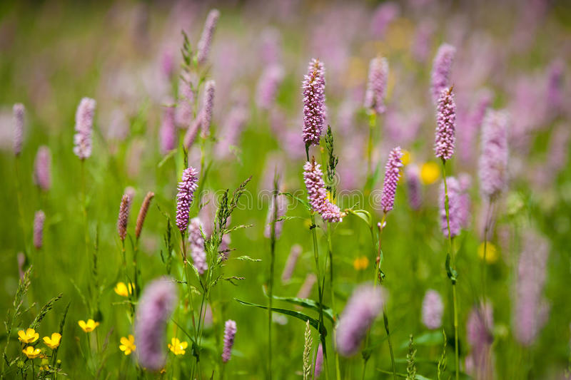 Download Grass and Flower stock photo. Image of season, background - 38197358