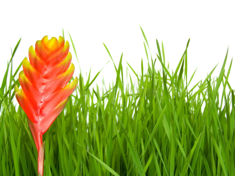 Grass and flower. Green, fresh spring grass grown from the seeds a flower stock photography