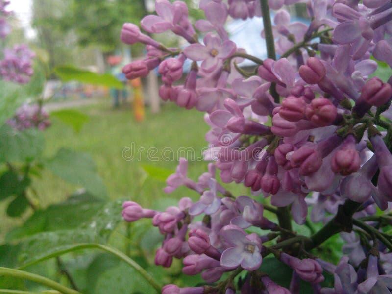 Grass2flower image libre de droits
