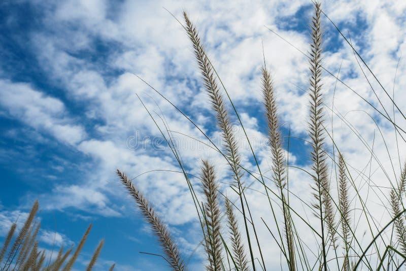 Grass Flower stock photo