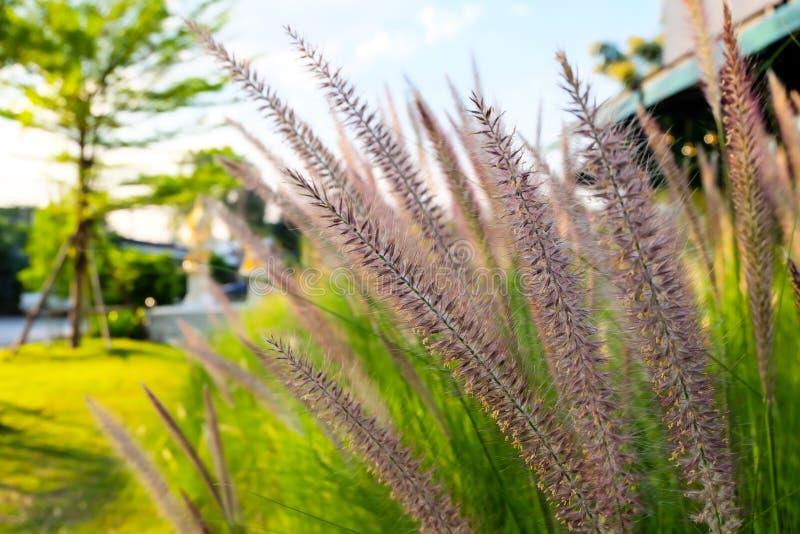 Grass flower close up shot. And sun light stock photos