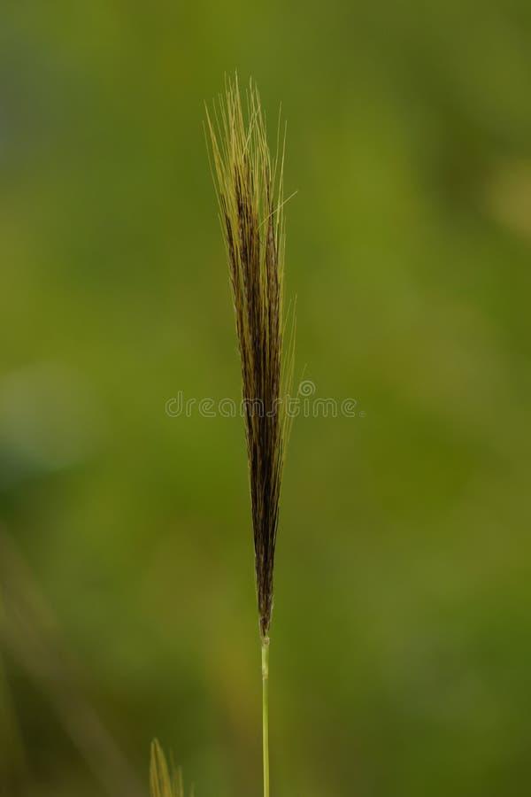 Download Grass flower stock image. Image of green, flower, sharp - 83724757