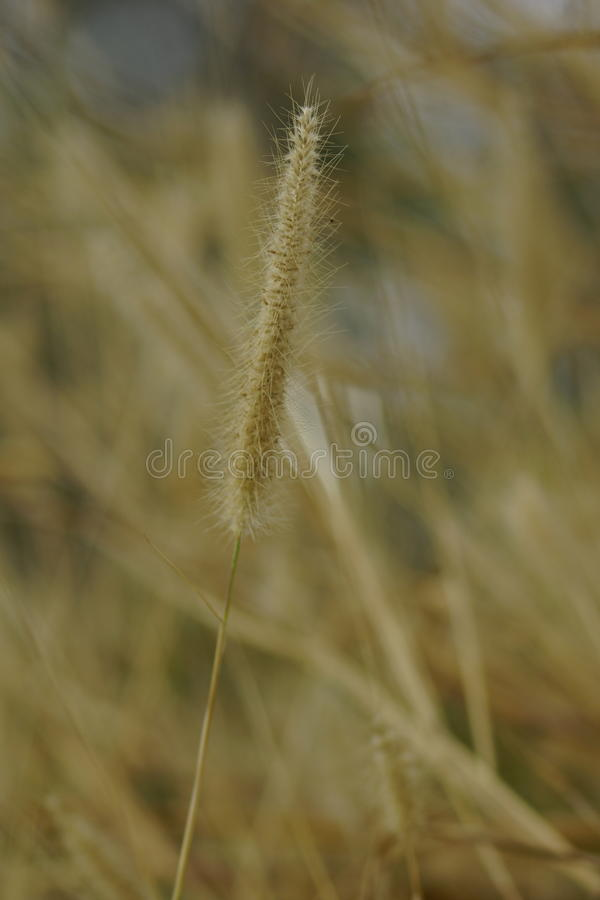 Download Grass Flower Stock Photo - Image: 83724846