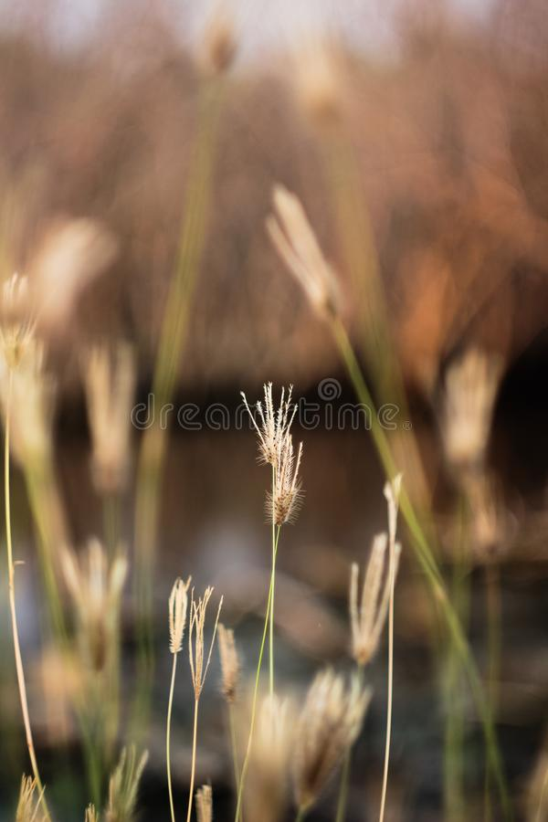 Grass flower in the grass field stock image