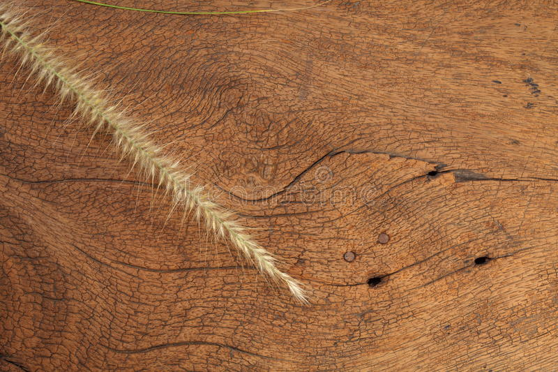 Grass flower on hard wood. Close up photo of mature grass flower putting on the dark brown color hard wood and platemat in the scene represent the detail of royalty free stock image
