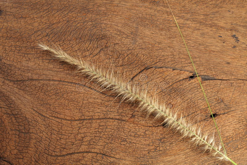 Grass flower on hard wood. Close up photo of mature grass flower putting on the dark brown color hard wood and platemat in the scene represent the detail of stock photos