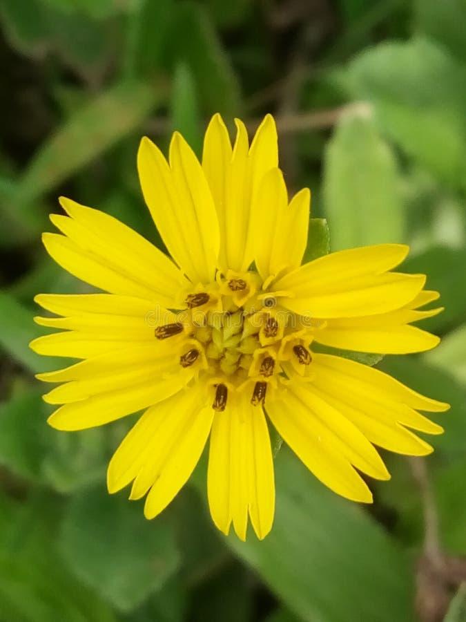 Grass flower stock photography
