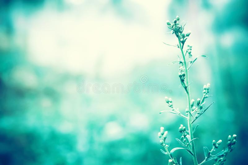 Grass flower in morning light  of  sunrise  with blue color filter effect. Abstract spring nature wallpaper background stock photo