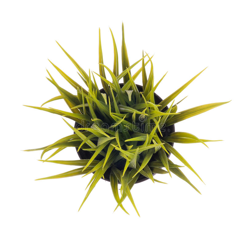 Download Isolated Grass Pot Royalty Free Stock Images - Image: 25027609