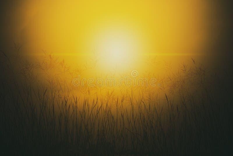 Grass flower in sunset or sunrise autumn season change. Silhouette landscape of grass flower in fog stock image
