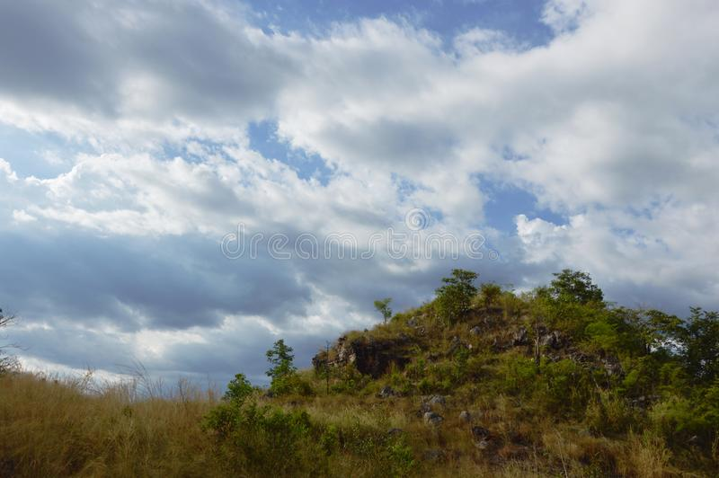 Grass flowering blowing from wind on khao Lon mountain Thailand stock images
