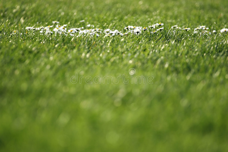Download Grass and flowers stock image. Image of park, play, garden - 137777