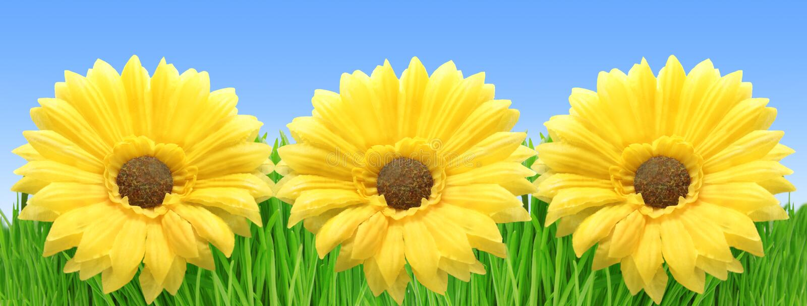 Download Grass And Flowers Stock Photos - Image: 24892143
