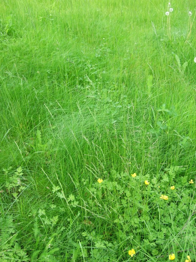 Download Grass and flowers stock photo. Image of green, detail - 5946362
