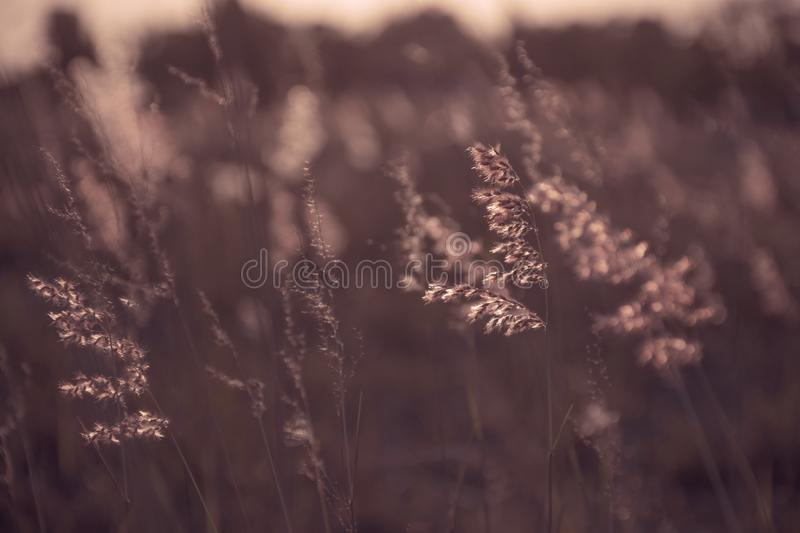 Meadows royalty free stock photography