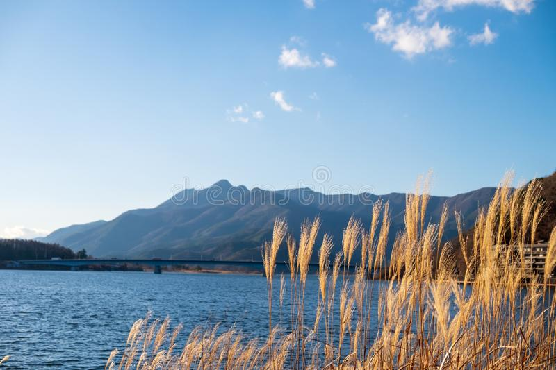 Grass and flowers in front of the lake and mountain stock image