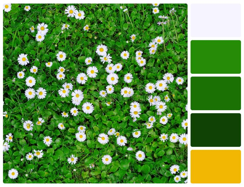 Grass and flowers with palette color swatches. Grass and flowers. Colour palette with complimentary colour swatches stock photo