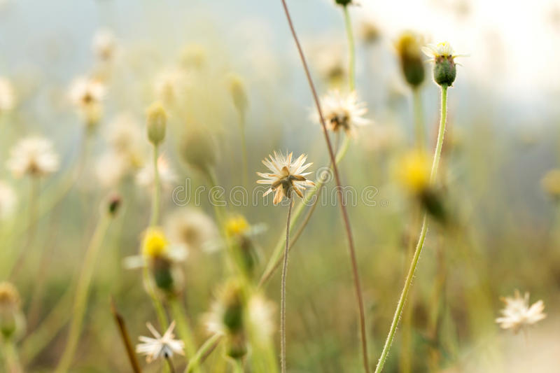 Grass flowers selective focus with shallow depth of field royalty free stock photo