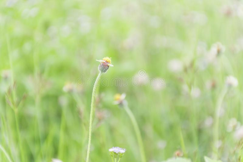 Grass flowers suitable for background royalty free stock photo
