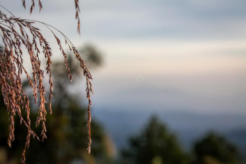 Grass flowers and sunrise sunset royalty free stock photography