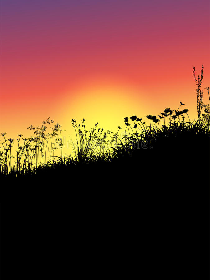Download Grass And Flowers At Sunset Stock Vector - Image: 26504978