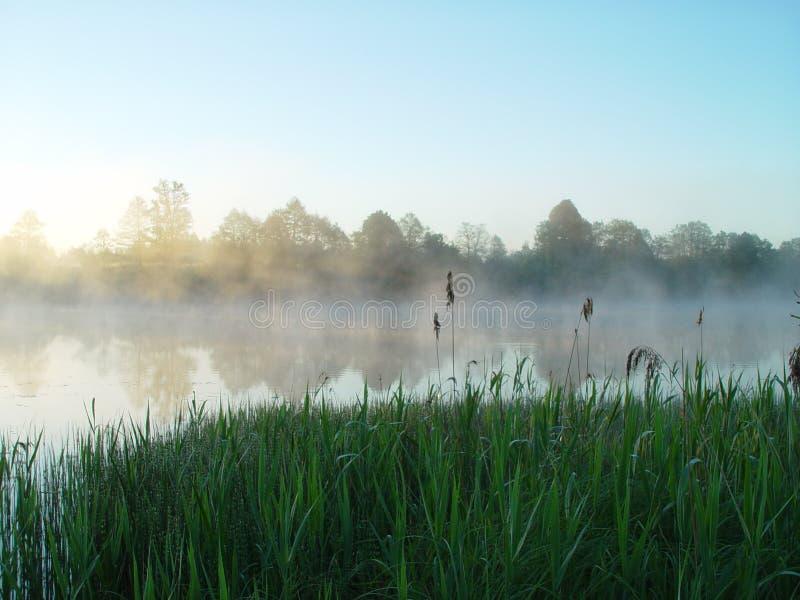 Grass&Fog zdjęcie royalty free