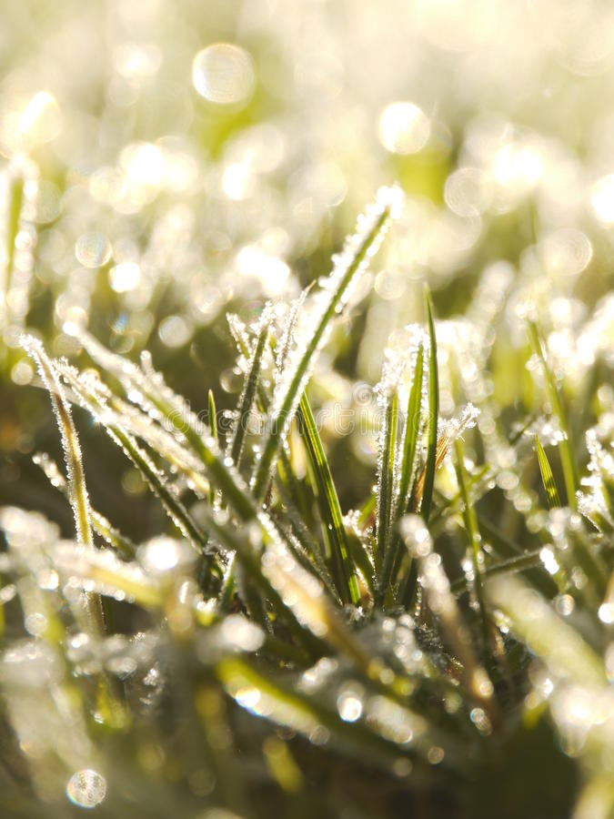 Download Grass frost stock photo. Image of macro, frost, blossom - 28155278