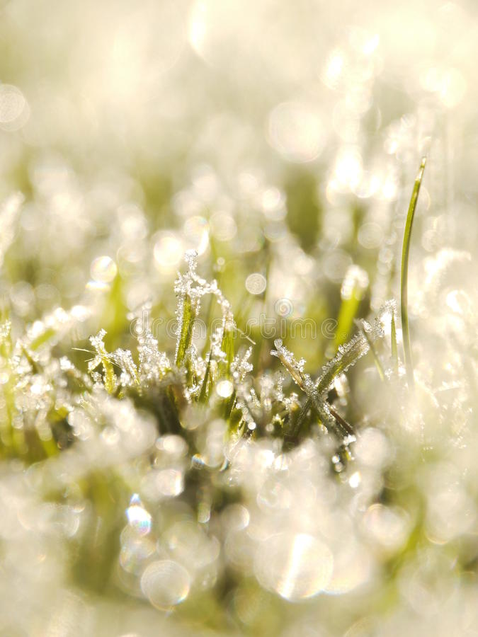 Download Grass frost stock photo. Image of brown, green, leaf - 28593978