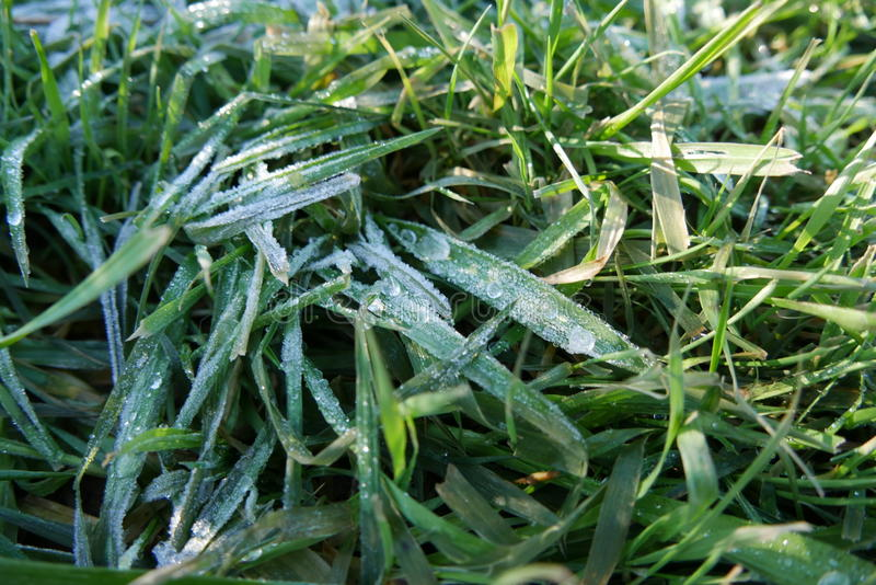 Download Grass and Frost in Oregon stock image. Image of hood - 83715119