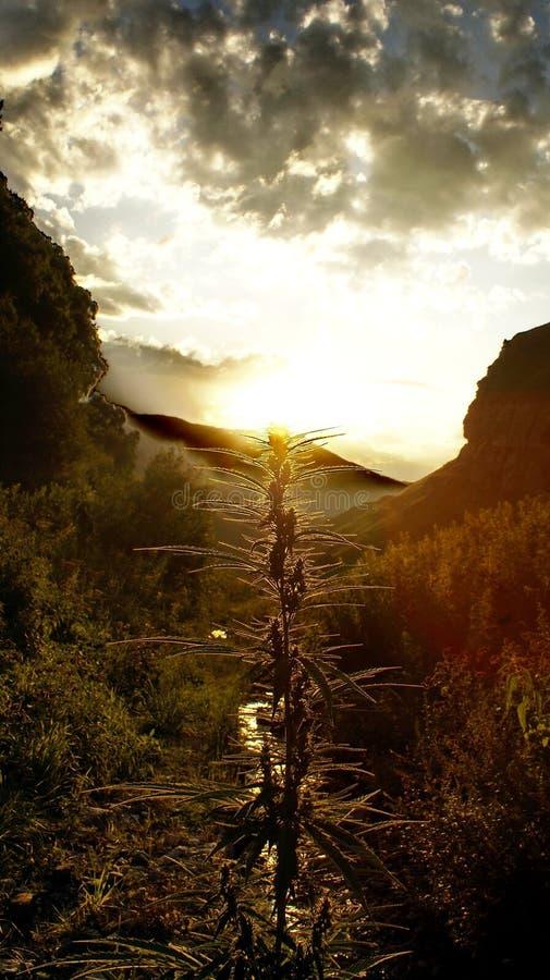 grass góra magicznego zmierzch zdjęcia royalty free