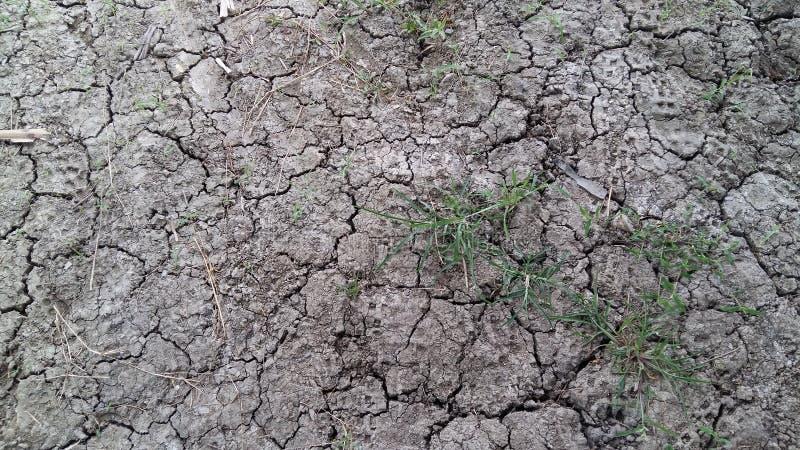 Grass, grass, clay, clay, gray clay royalty free stock photo
