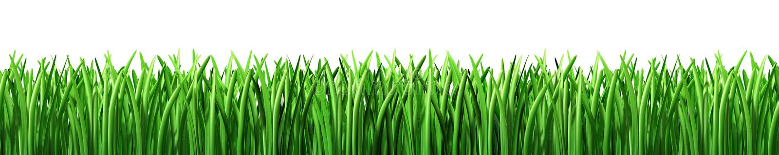 Grass green lawn isolated vector illustration